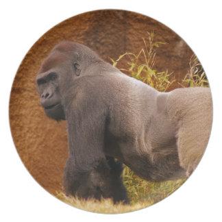 Silverback Gorilla Photo  Plate