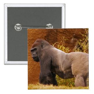 Silverback Gorilla Photo Square Pin