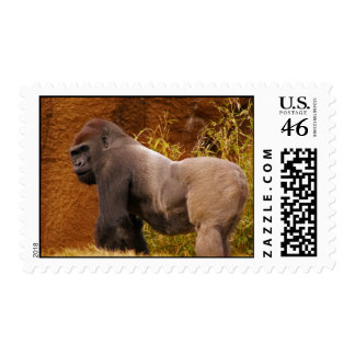 Silverback Gorilla Photo Stamp