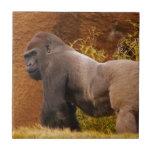 Silverback Gorilla Photo  Tile