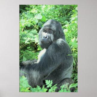 Silverback Gorilla Posters