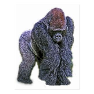 Silverback Gorilla, White Back (g2p2) Postcard