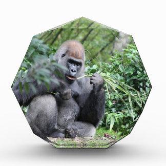 silverback gorillas acrylic award