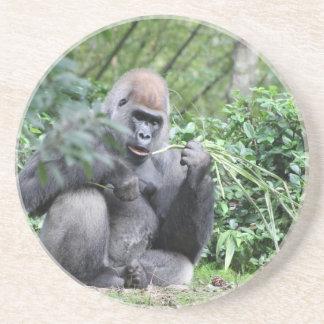 silverback gorillas coaster