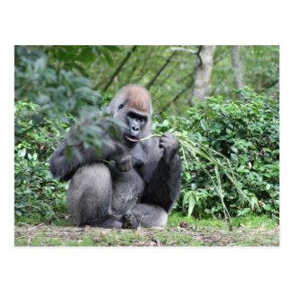 silverback gorillas postcard