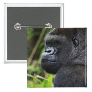 Silverback Lowland Gorilla, Gorilla Captive Button