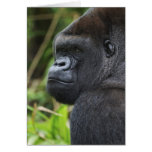 Silverback Lowland Gorilla, Gorilla Captive Greeting Cards