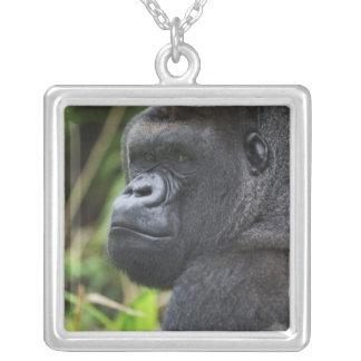 Silverback Lowland Gorilla, Gorilla Captive Square Pendant Necklace