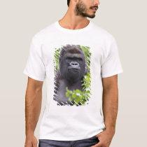 Silverback Lowland Gorilla, Gorilla gorilla, T-Shirt