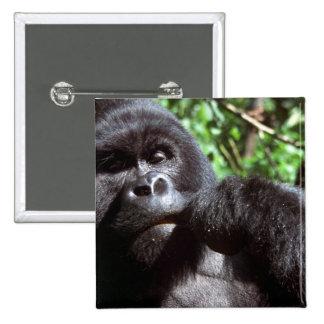 Silverback male gorilla pinback button