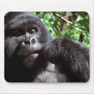 Silverback male gorilla mouse pad