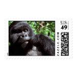 Silverback male gorilla postage