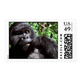 Silverback male gorilla stamps