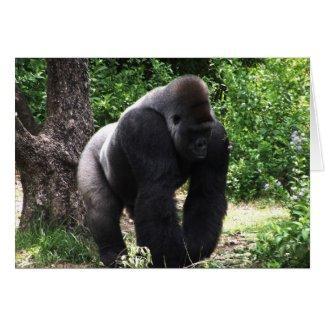 Silverback Male Gorilla walking head down.jpg Cards