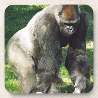 Silverback Male Lowland Gorilla Standing Up Beverage Coaster