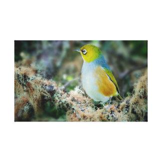 Silvereye bird canvas print