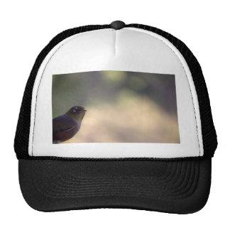 Silvereye Trucker Hat