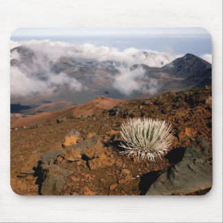 Silversword en borde del cráter de Haleakala de 3  Alfombrillas De Raton