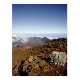 Silversword en borde del cráter de Haleakala de ce Postales