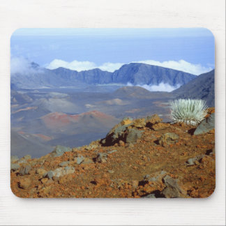 Silversword on Haleakala Crater  Rim from near 2 Mouse Pad
