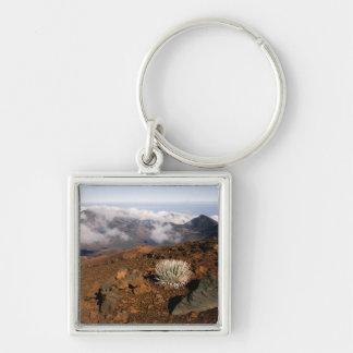 Silversword on Haleakala Crater  Rim from near 3 Keychain