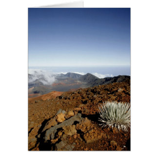 Silversword on Haleakala Crater  Rim from near Card
