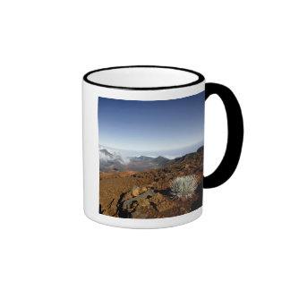Silversword on Haleakala Crater  Rim from near Mug