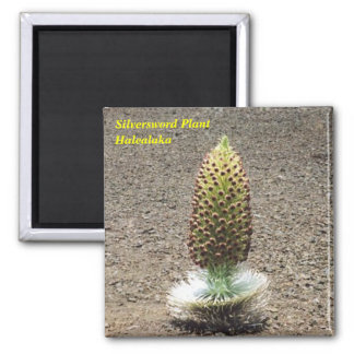 silversword plant magnet