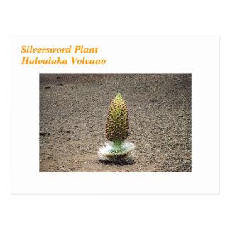 silversword plant postcard