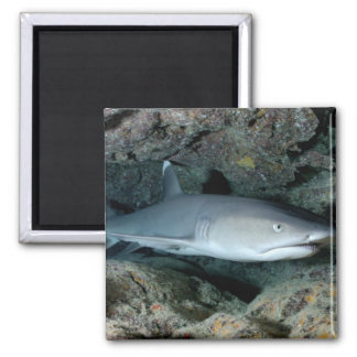 Silvertip Shark 2 Inch Square Magnet
