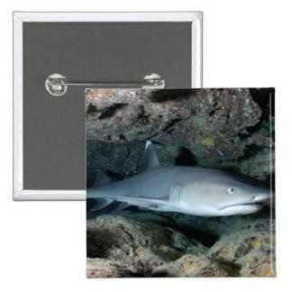 Silvertip Shark Pinback Button