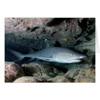 Silvertip Shark Card