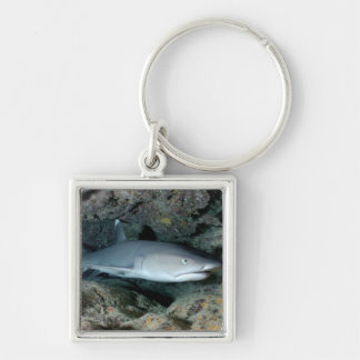 Silvertip Shark Keychain