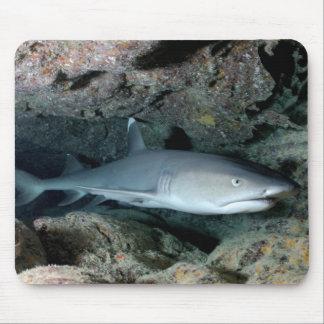 Silvertip Shark Mouse Pads