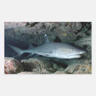 Silvertip Shark Sticker