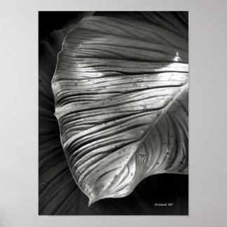 Silvertone Leaf Poster