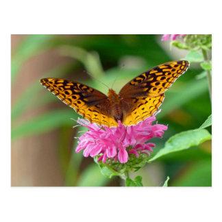 Silvery Checkerspot Butterfly Postcard