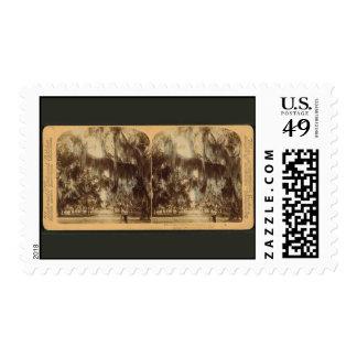 Silvery Draperies of Daytona Postage Stamps
