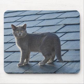 Silvery Grey Kitten Mouse Pad
