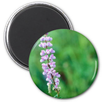 Silvery Lupine Magnet