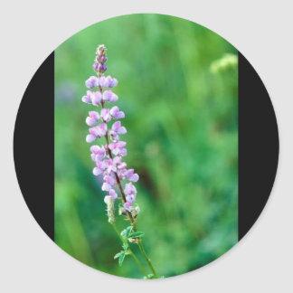 Silvery Lupine Stickers