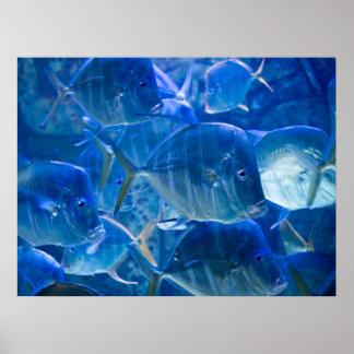 Silvery Tropical Fish Print