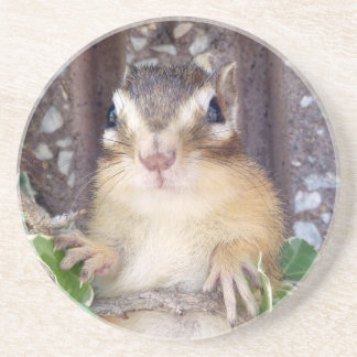 Sima lith, chipmunk sandstone coaster