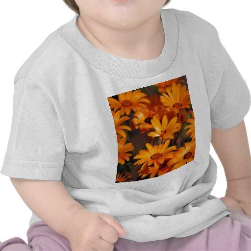 Simbolismo de la flor de la margarita del Hippie Camisetas