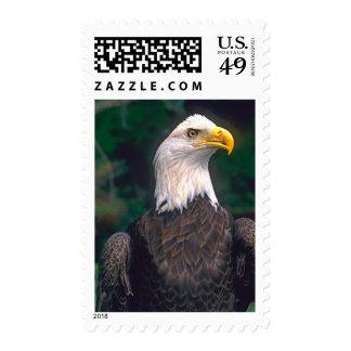 Símbolo americano de la libertad Eagle calvo en Sello
