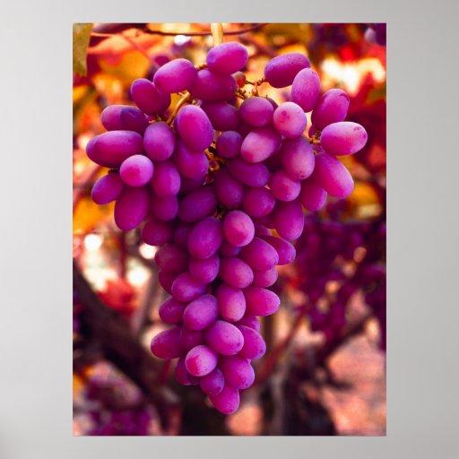 Símbolo de Chavez de las uvas Póster