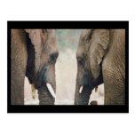 Simetría del elefante postales