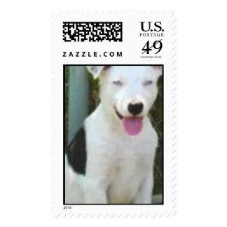 Simon mail postage stamp