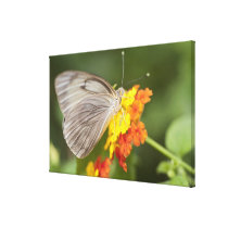 Simple butterfly on yellow and red flowers canvas print