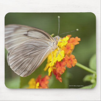 Simple butterfly on yellow and red flowers mouse pad